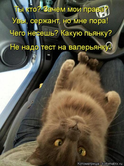 kotomatritsa_4k (524x700, 360Kb)