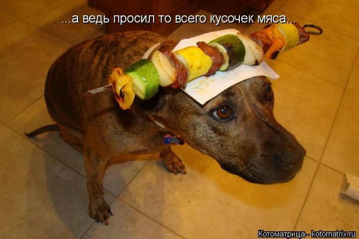kotomatritsa_C (700x465, 293Kb)
