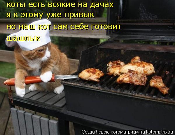 kotomatritsa_Fi (600x464, 196Kb)