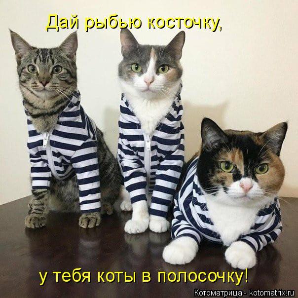 kotomatritsa_2N (604x604, 244Kb)