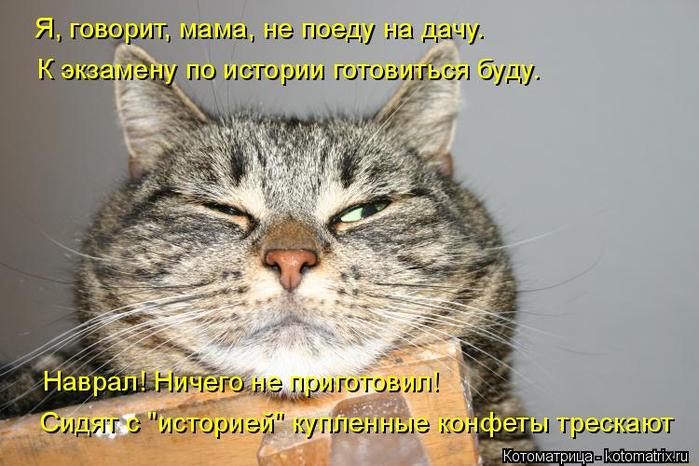 kotomatritsa_8 (700x466, 323Kb)