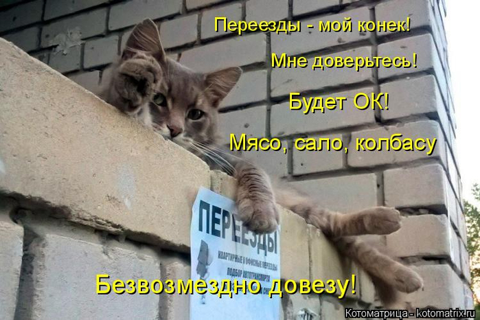 kotomatritsa_81 (700x466, 332Kb)