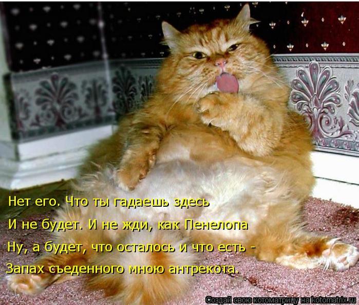 kotomatritsa_ZP (700x593, 469Kb)