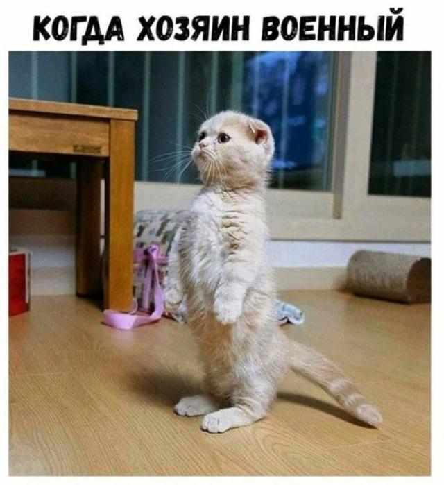 4743317_Kot (640x700, 263Kb)