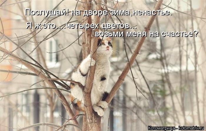 kotomatritsa_QO (700x447, 300Kb)