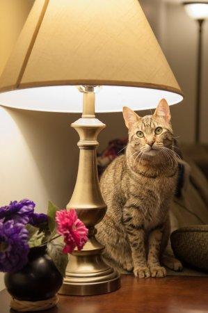 depositphotos_59409147-stock-photo-cat-in-a-lamp (299x450, 88Kb)