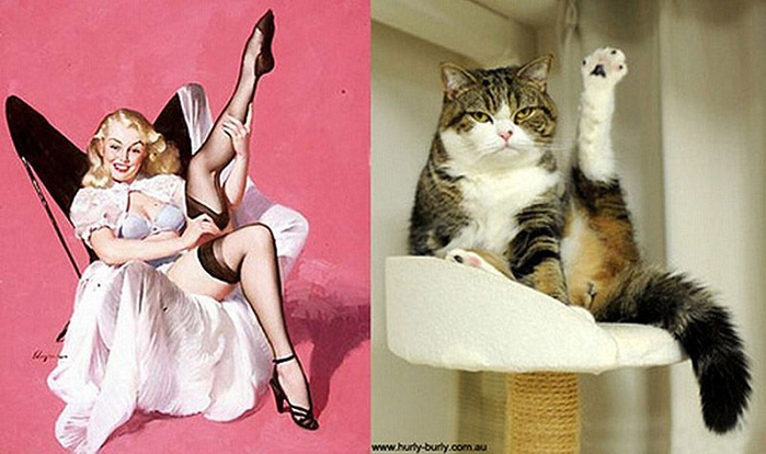 http_ catsthatlooklikepinupgirls.tumblr.com (700x414, 269Kb)