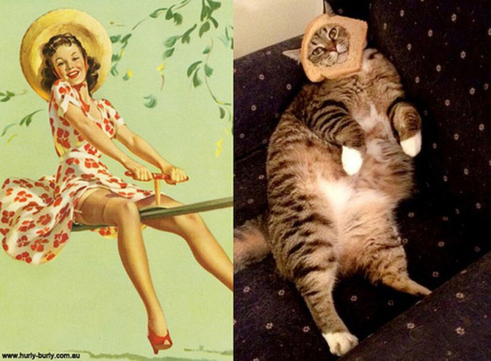 http_ catsthatlooklikepinupgirls.tumblr.com _717506 (700x514, 375Kb)