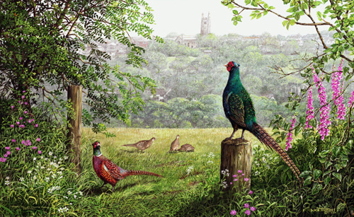 A Cornish Country Scene - Pheasants (500x307, 167Kb)