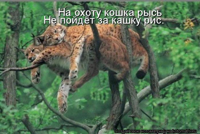 kotomatritsa_1r (700x470, 348Kb)