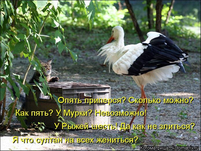 kotomatritsa_9 (695x522, 387Kb)