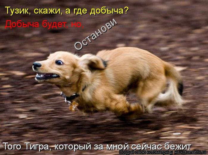 kotomatritsa_c (700x522, 358Kb)