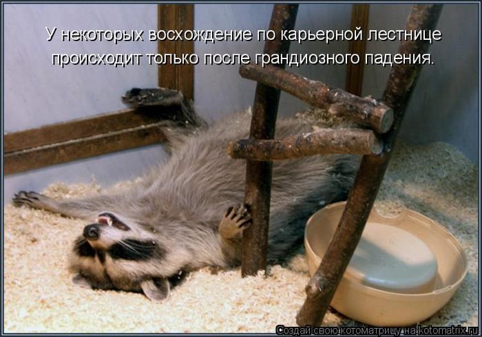 kotomatritsa_e (700x490, 331Kb)