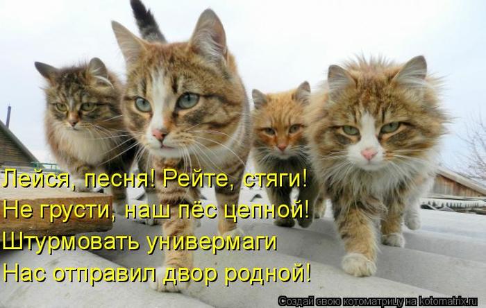 kotomatritsa_KU (700x444, 327Kb)