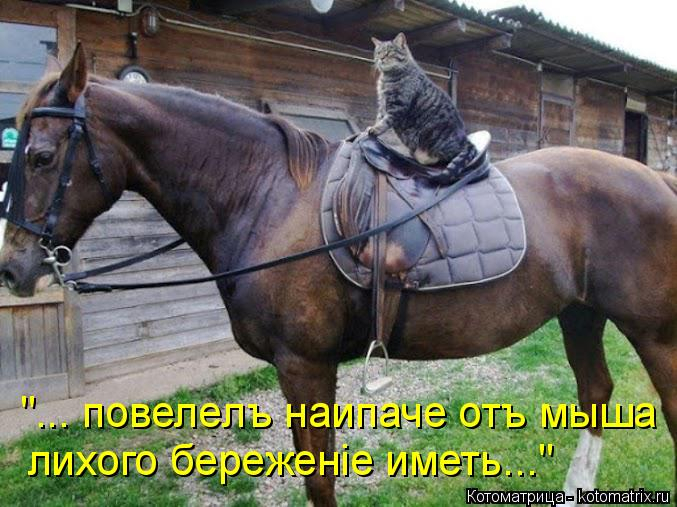 kotomatritsa_s (677x507, 282Kb)