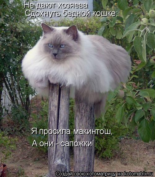 kotomatritsa_T (1) (500x568, 226Kb)