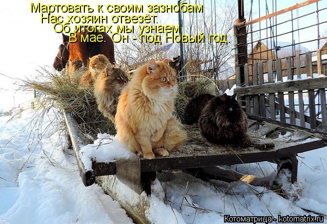 kotomatritsa_u (670x460, 306Kb)