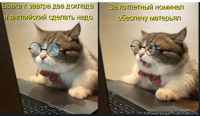 kotomatritsa_W (700x406, 276Kb)