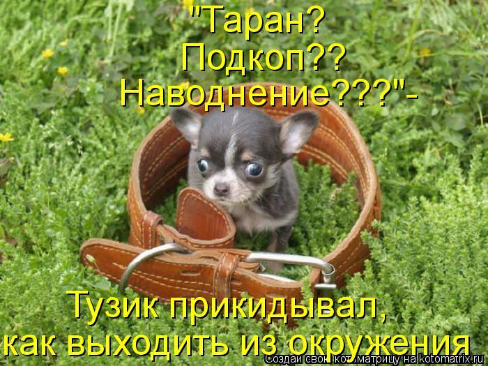 kotomatritsa_Y (700x525, 389Kb)
