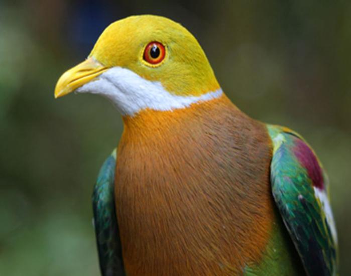 bird13 (700x550, 271Kb)