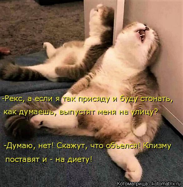 kotomatritsa_8 (584x596, 255Kb)