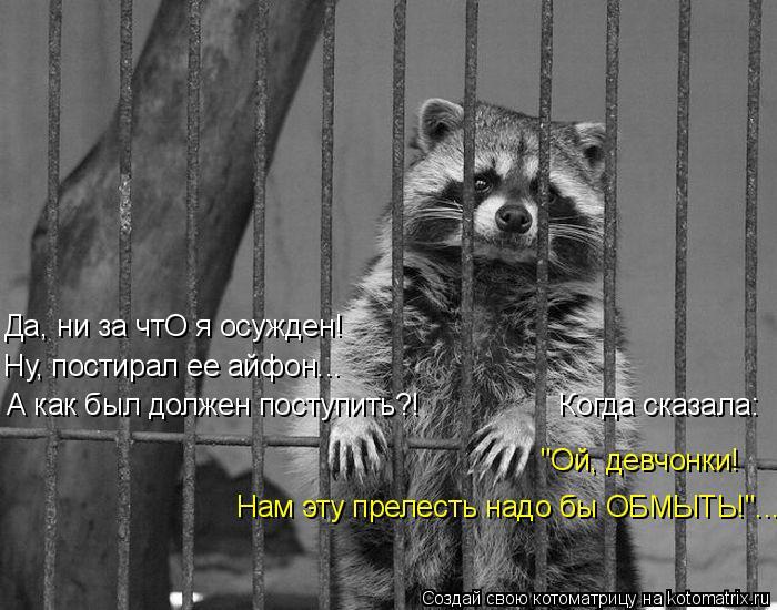 kotomatritsa_iP (700x550, 198Kb)