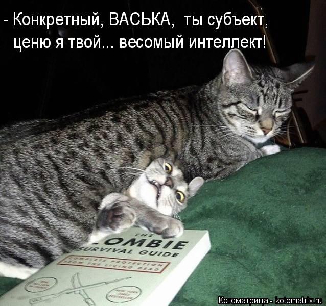 kotomatritsa_uU (638x600, 185Kb)