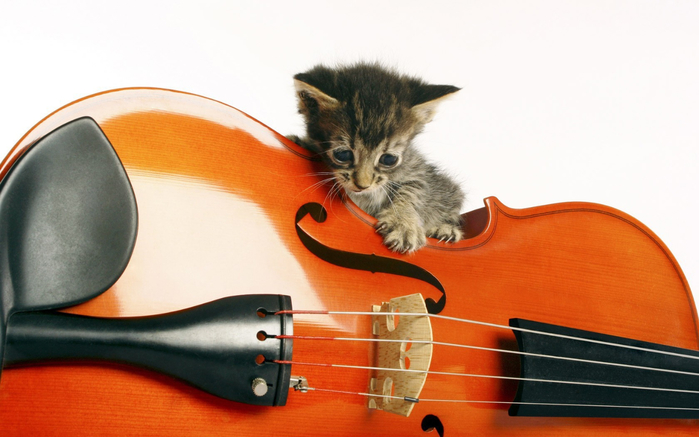 music-animals-instruments-kittens-1680x1050-wallpaper (700x437, 267Kb)