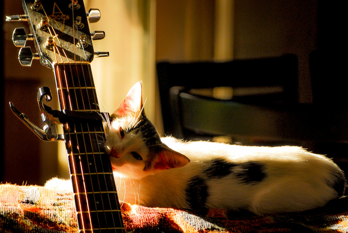 cat-and-guitar (700x468, 405Kb)