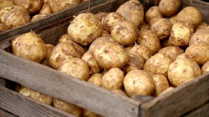 4535473_1591639394_young_potatos_2 (700x393, 67Kb)
