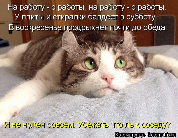 kotomatritsa_dK (600x468, 245Kb)