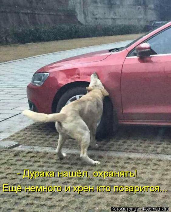 kotomatritsa_iu (563x700, 364Kb)
