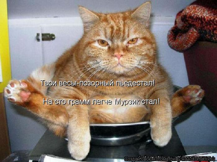 kotomatritsa_K (700x523, 345Kb)