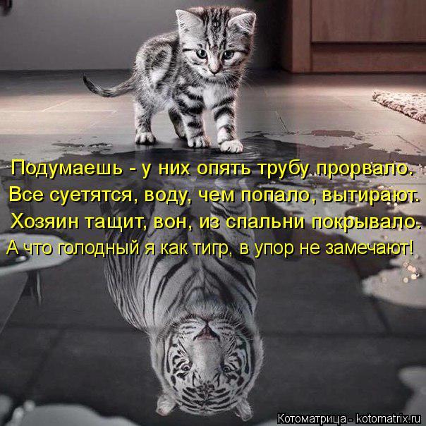 kotomatritsa_R (604x604, 277Kb)