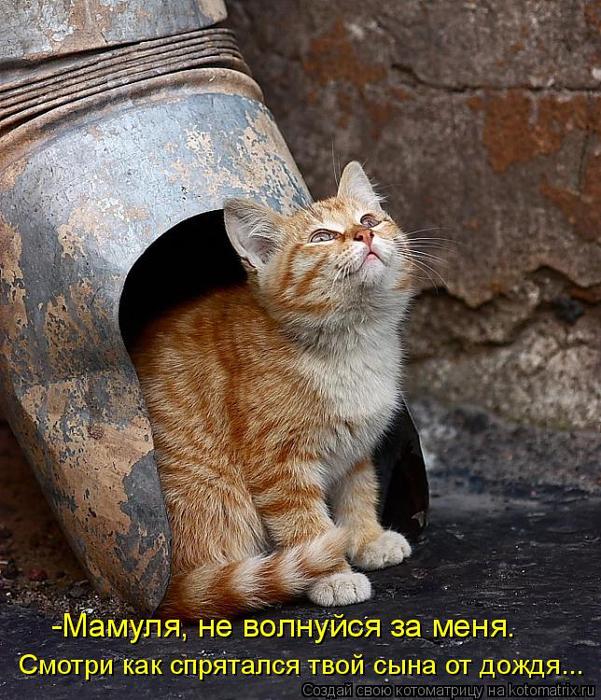 kotomatritsa_wZ (601x700, 486Kb)