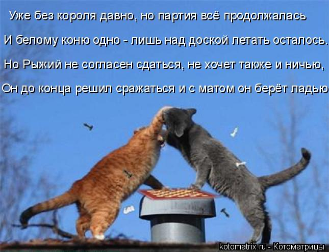 kotomatritsa_T (645x495, 250Kb)