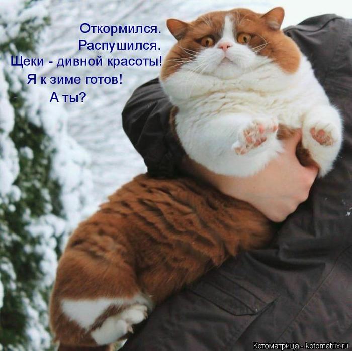 kotomatritsa_4 (700x699, 427Kb)