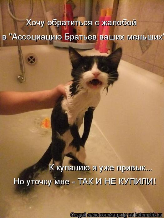 kotomatritsa_9 (524x700, 326Kb)