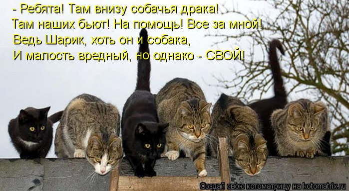 kotomatritsa_XL (700x384, 321Kb)