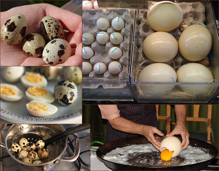 Вкусные и полезные птичьи яйца