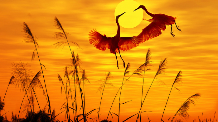 birds-sunlight-sunset-sky (700x393, 342Kb)