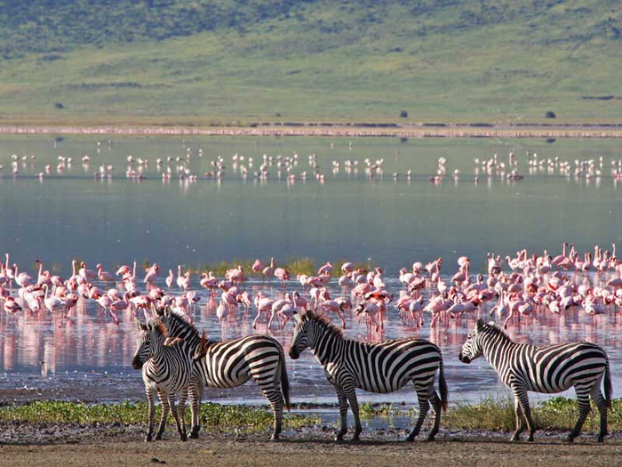 tanzanie_ngorongoro_crater_zebras_flamingos_shutterstock_travel_stock_50941147 (700x525, 408Kb)