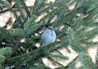Посмотреть все фотографии серии Птицы