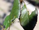 Посмотреть все фотографии серии Насекомые и пауки