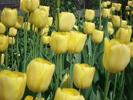 Посмотреть все фотографии серии Цветочки моего сада