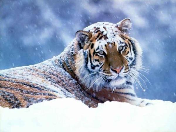 http://img0.liveinternet.ru/images/foto/b/0/236/3604236/f_19098392.jpg