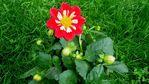 Посмотреть все фотографии серии Цветы из моего сада