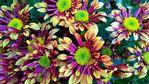Посмотреть все фотографии серии Хризантемы из моего сада