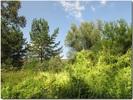 У лесного ручья. Август