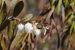 Посмотреть все фотографии серии Природа Тындинского района.